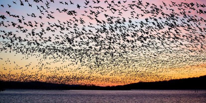 pticy