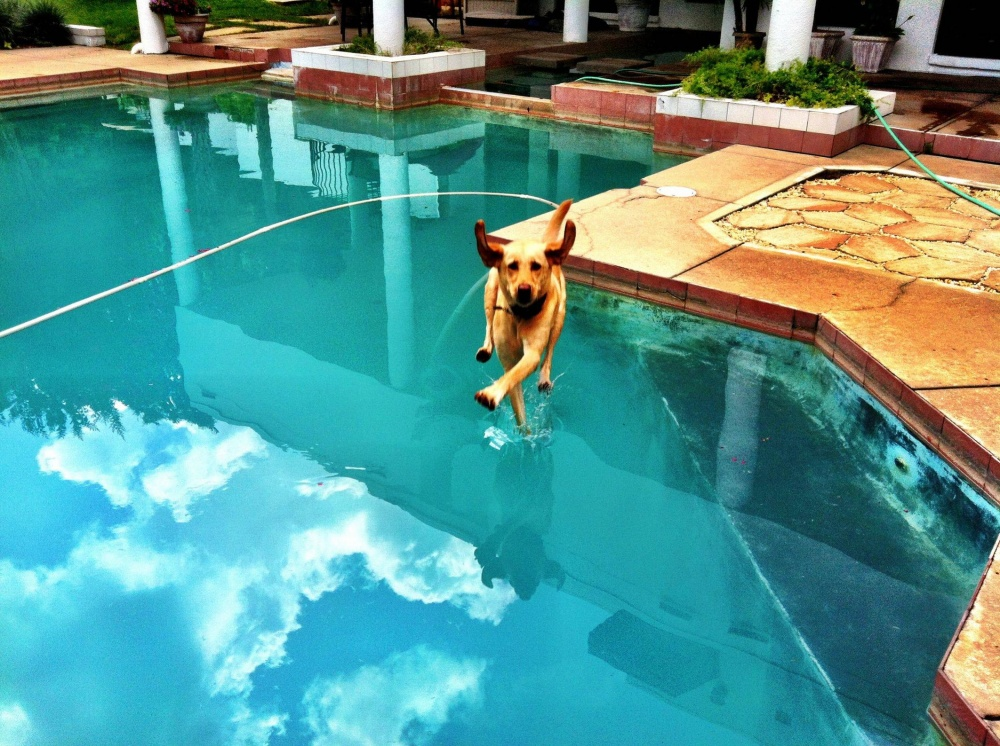 2474460-perfectly-timed-dog-photos-a-31-1000-cd51ba4441-1484729257