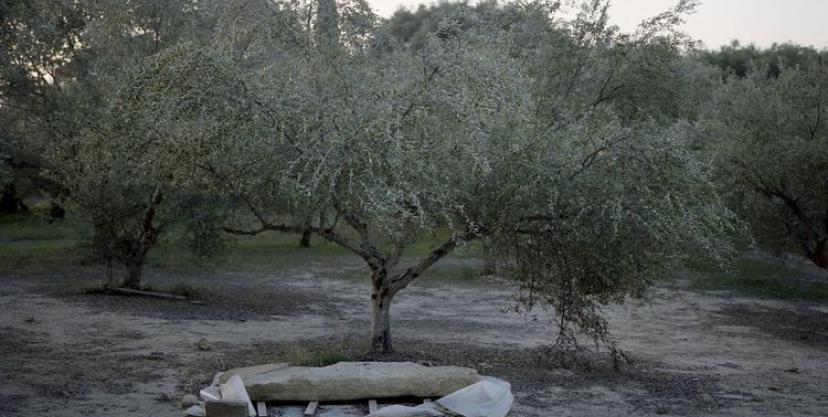 zaxoronenie v olivkovoy roshche